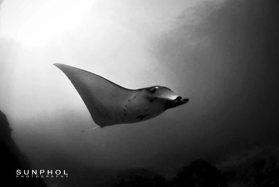 There were 3 mantas all together that day. The visibility was very poor.