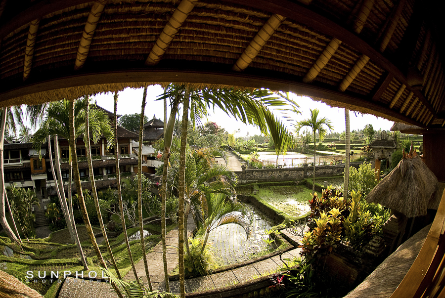 View of the mini rice terrace inside the resort