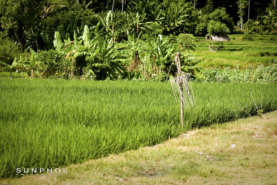Bali09_DSC_0092