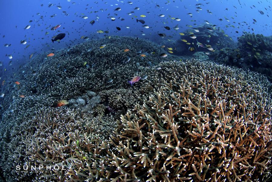 Bali10P1_Bali10-0168