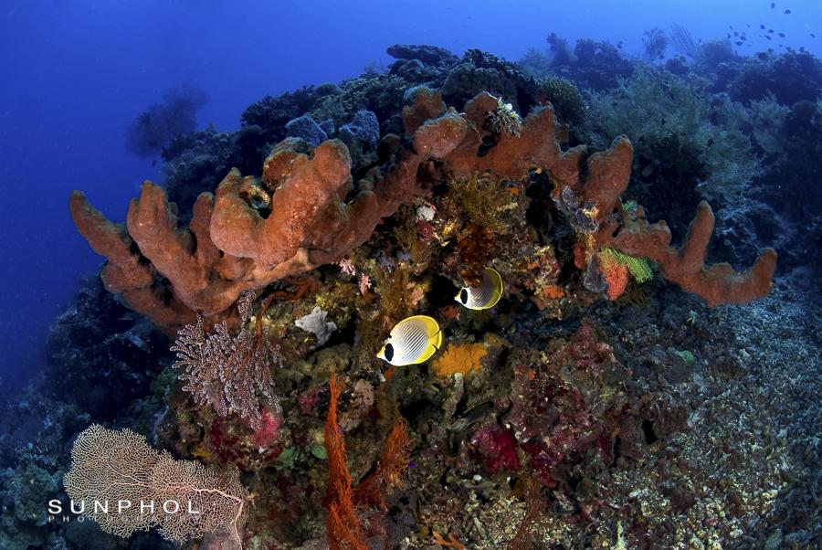 Bali10P2_Bali10-0414